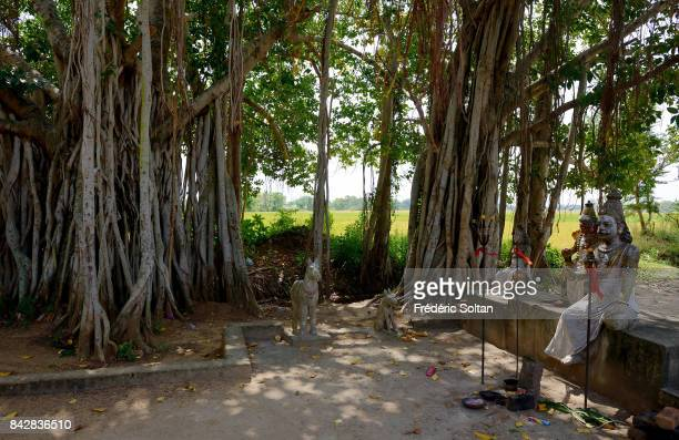 Small temple under a banyan tree in Tamil Nadu on January 22 2017 in India