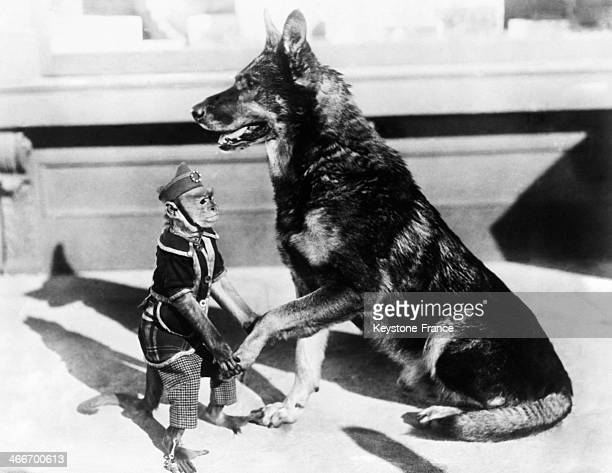 Small trained monkey is shaking a German Shepherd dog's paw in 1929.