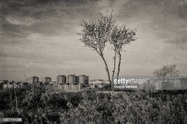 small tree flowered in spring - vicente méndez fotografías e imágenes de stock