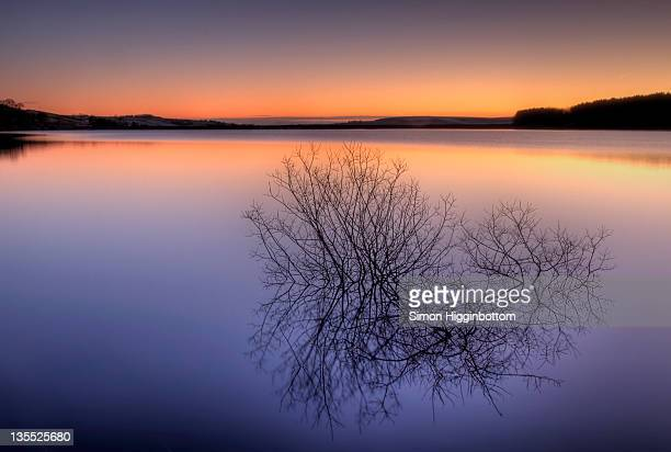 small trees reflection in lake at sunrise - simon higginbottom stock pictures, royalty-free photos & images