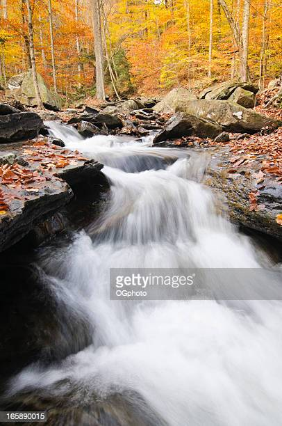small waterfall in the autumn woods - ogphoto stock pictures, royalty-free photos & images