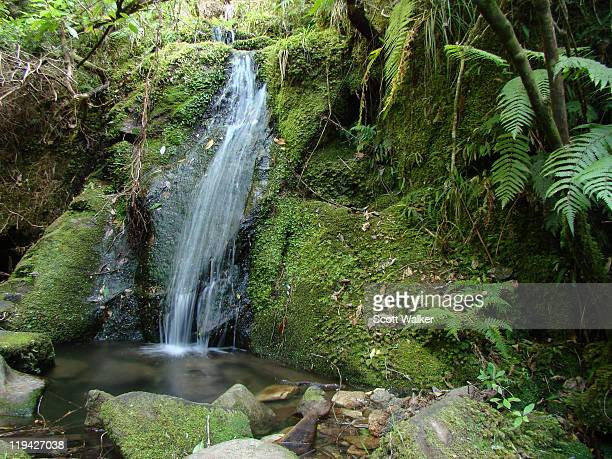Small waterfall on Abel Tasman Track