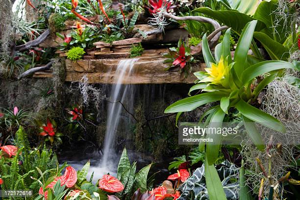 small waterfall surrounded by red and yellow flowers - bromeliad stock photos and pictures