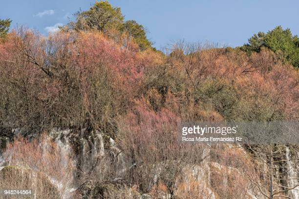 Small waterfalls between trees, rocks and grasses, at the source of a river of clear waters in springtime. Cuenca, Castilla la Mancha, Spain