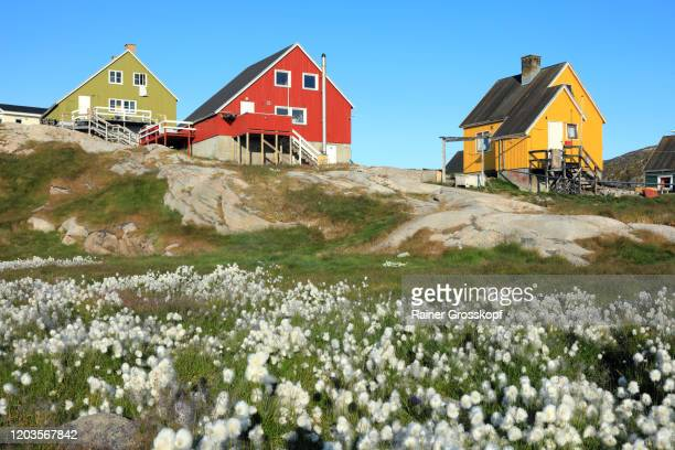 small wooden houses with cottongrass in the foreground - rainer grosskopf stock pictures, royalty-free photos & images