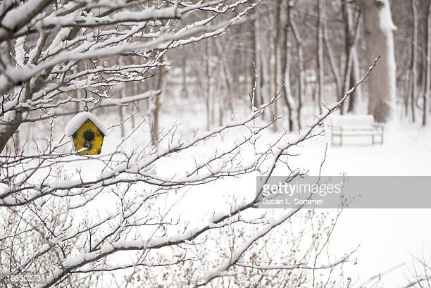 CONTENT] A small yellow birdhouse brightens the yard after a spring snow storm