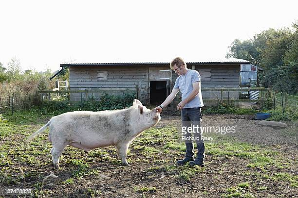 World S Best Large White Pig Stock Pictures Photos And