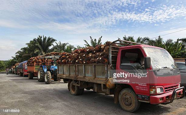 Smallholders' trucks loaded with oil palm fruit stand outside the Felda Global Ventures Holdings Bhd palm oil plant in Besout Perak Malaysia on...