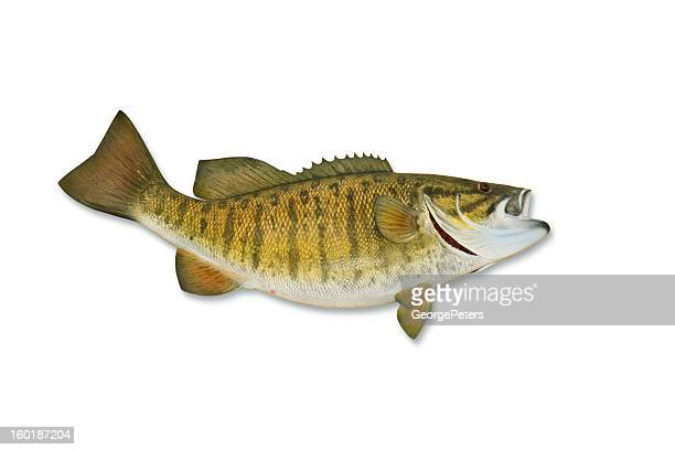 Smallmouth Bass with Clipping Path
