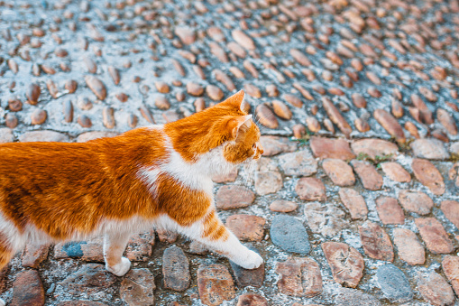 Smart cute red cat walks down the street freely by itself 1084965328