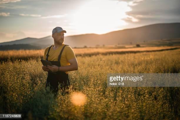 農業における最新技術を用いてスマート農業 - スマート農業 ストックフォトと画像