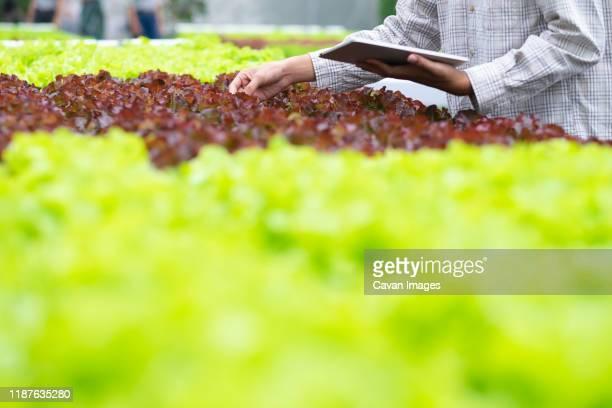 smart farming using modern technologies in agriculture. - スマート農業 ストックフォトと画像