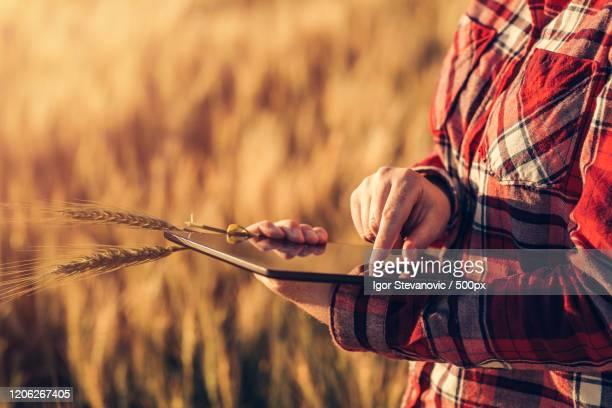 smart farming, using modern technologies in agriculture - スマート農業 ストックフォトと画像