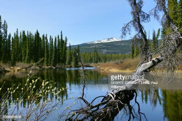 smart river, alaska highway 1, british columbia, canada - río swift fotografías e imágenes de stock