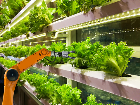 Smart robotic farmers in agriculture futuristic robot automation to vegetable farm 1082376570