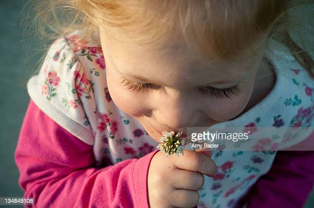 smell - amy shamrock stock pictures, royalty-free photos & images
