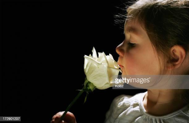 Riechen eine Rose