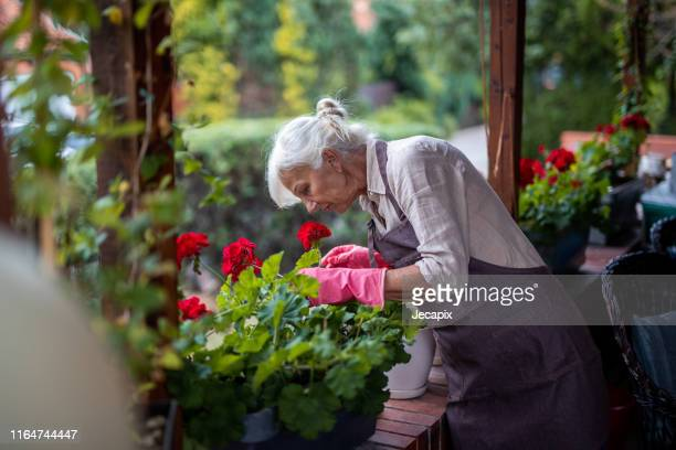 smelling her flowers - geranium stock pictures, royalty-free photos & images