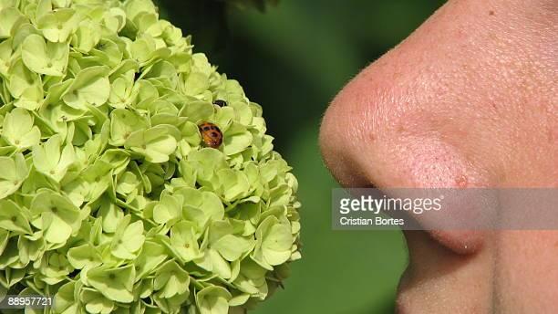smelling nature - bortes foto e immagini stock