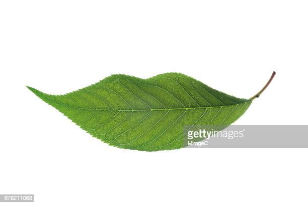 Smile From a Green Leaf