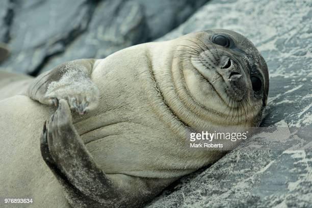 smile - フォークランド諸島 ストックフォトと画像