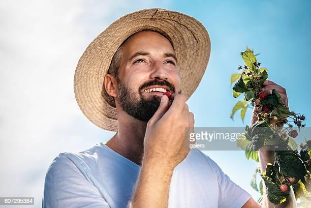 smiling bearded handsome gardener eating raspberry from bush