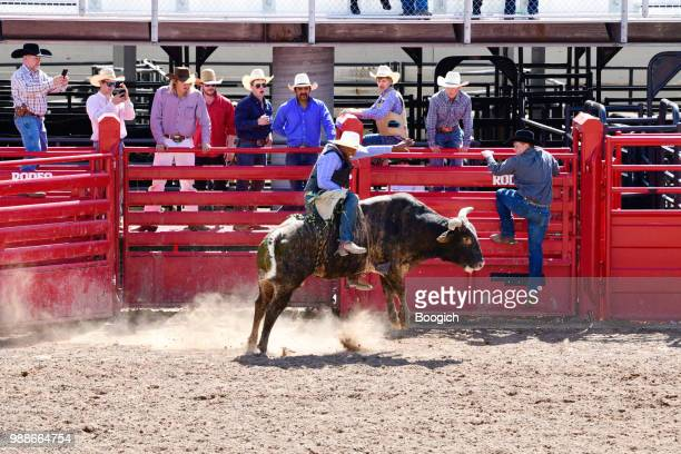 Smiling Black Cowboy Riding Bull at Rodeo Event Utah USA