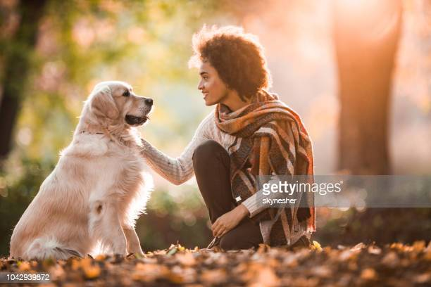 smiling black woman talking to her retriever in autumn day. - autumn dog stock pictures, royalty-free photos & images