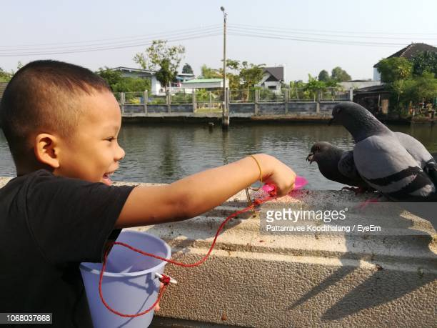 smiling boy feeding pigeons at lakeshore in city - lakeshore stock pictures, royalty-free photos & images