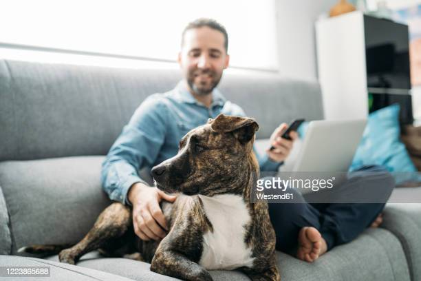 smiling businessman stroking dog while working from home during coronavirus pandemic outbreak, almeria, spain, europe - alleen één mid volwassen man stockfoto's en -beelden
