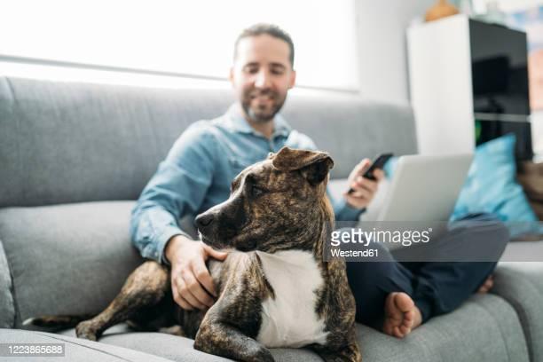 smiling businessman stroking dog while working from home during coronavirus pandemic outbreak, almeria, spain, europe - alleen één mid volwassen man stockfoto's en -beelden