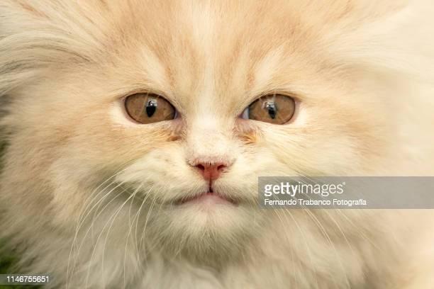 smiling cat - felino salvaje fotografías e imágenes de stock