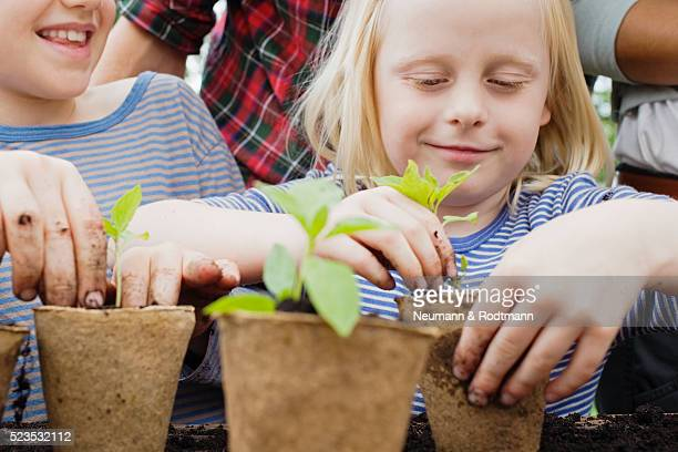 smiling children (5-6) planting seedlings - children only stock pictures, royalty-free photos & images