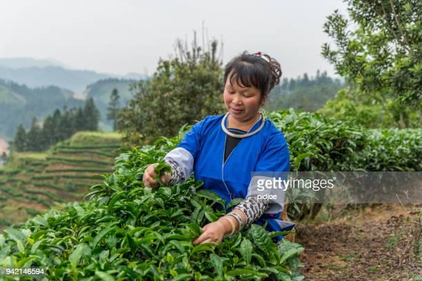 Smiling Chinese tea picker