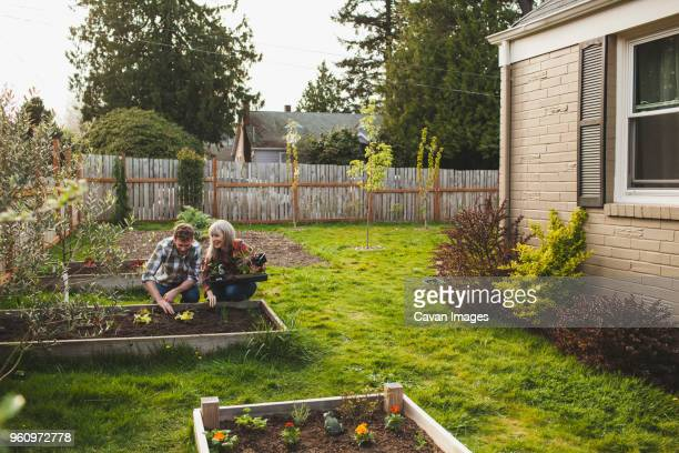 Smiling couple planting in raised bed at backyard