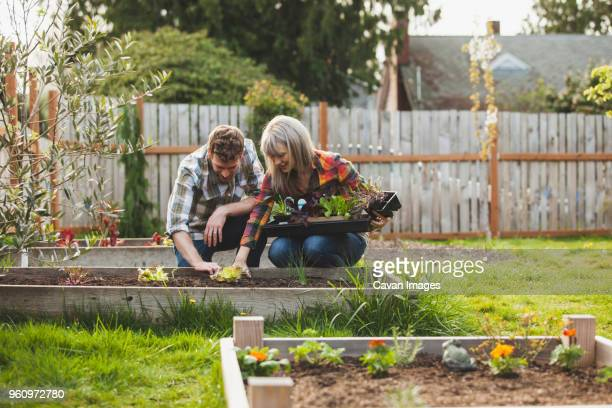 Smiling couple planting saplings in raised bed at backyard
