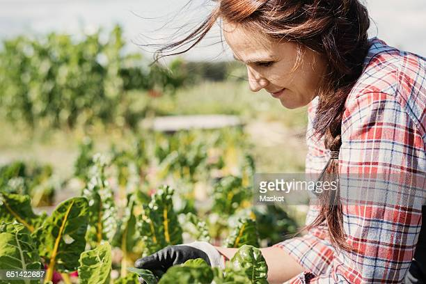smiling female gardener working on plants at farm - health food shop stock pictures, royalty-free photos & images