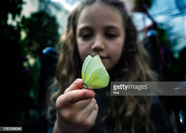smiling girl looking at a butterfly on her finger, italy - lepidoptera stock pictures, royalty-free photos & images