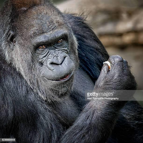 Smiling gorilla