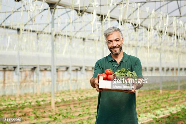 smiling handsome farmer holding crate of tomatoes - responsibility stock pictures, royalty-free photos & images