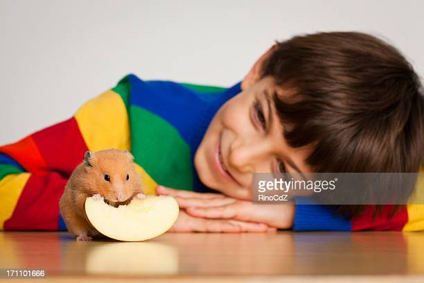 souriant enfant regardant un hamster, mise au point sélective - hamster photos et images de collection