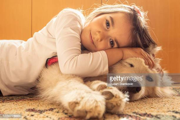 smiling little girl hugging her samoyed dog - dusan stankovic stock pictures, royalty-free photos & images