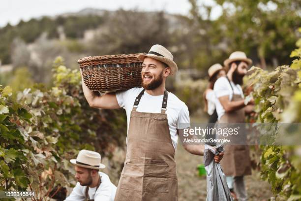 smiling male carrying harvested grapes while working on vineyard with friends - 18 23 months stock pictures, royalty-free photos & images