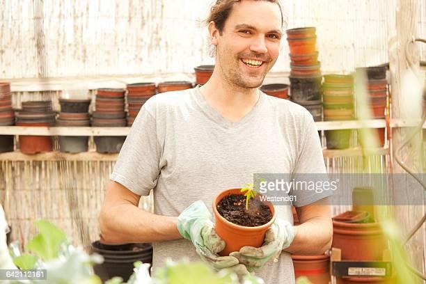 smiling man holding flowerpot with moringa seedling - moringa tree stock photos and pictures
