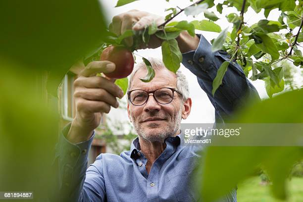Smiling man picking apple from tree