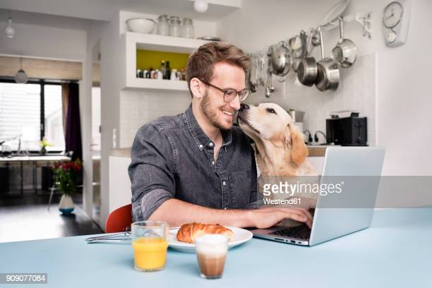 smiling man with dog using laptop in kitchen at home - hund stock-fotos und bilder