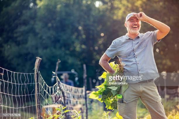 homme d'âge mûr souriant récolte organique homegrown haricot d'espagne - jardinier humour photos et images de collection