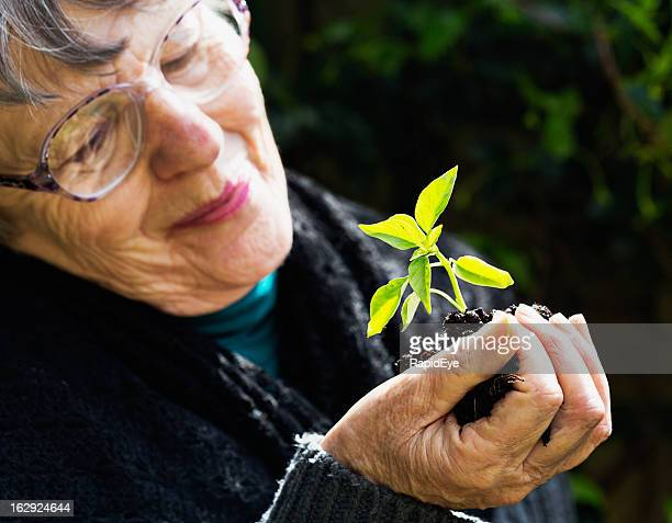 Smiling old woman looks at tender young seedling