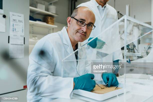 smiling scientist working on rodent brain with coworker standing in background at laboratory - grupo mediano de animales imagens e fotografias de stock