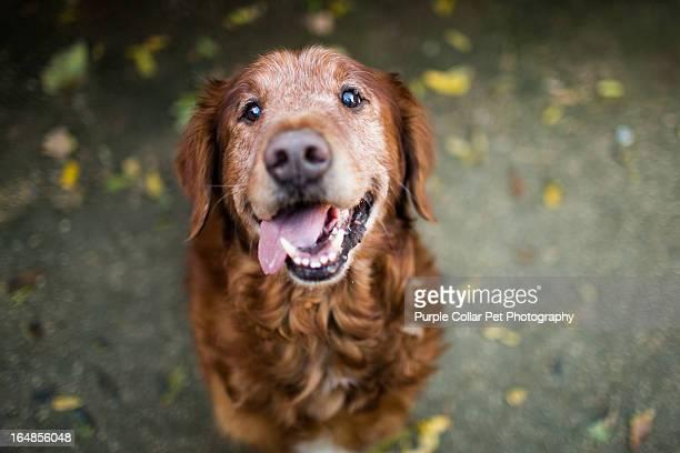 Smiling Senior Dog